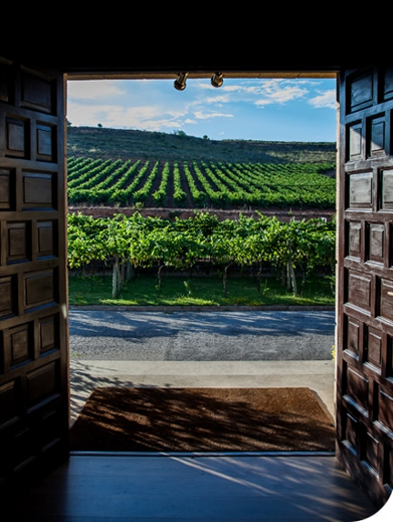 MH&DL Exclusive Terroirs Vineyard